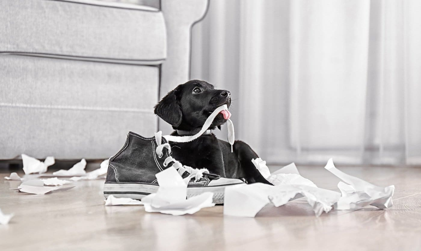 Puppy-proof your London home